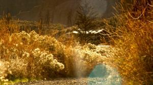 09 BC Landscape 03